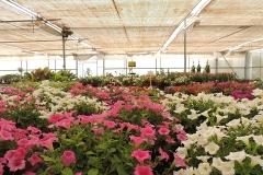 invernaderos-flores-viveros-ferca