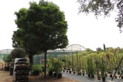 arboles-arbustos-viveros-ferca