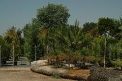 arboles-plantas-viveros-ferca