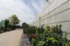 viveros-ferca-plantas-de-exterior