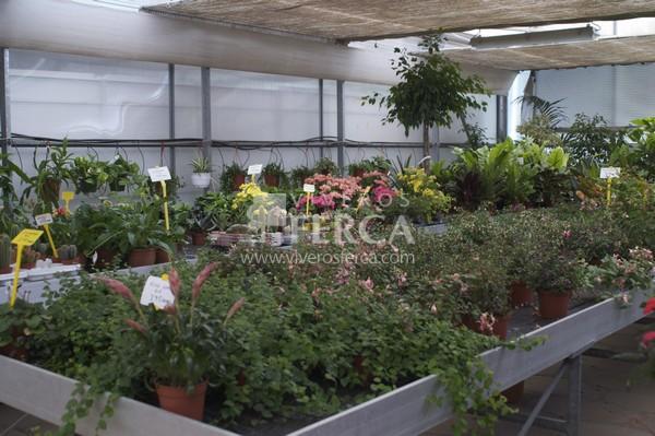 Planta de interior Viveros Ferca