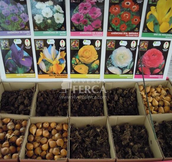 7 consejos para plantar tus bulbos de oto o invierno - Bulbos de otono ...
